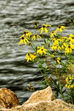flowers on the river.Mavreeso CG, San Juan NF