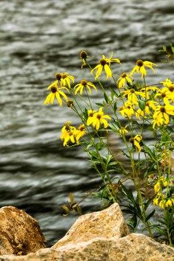 flowers on the river.Mavreeso CG, San Juan NF