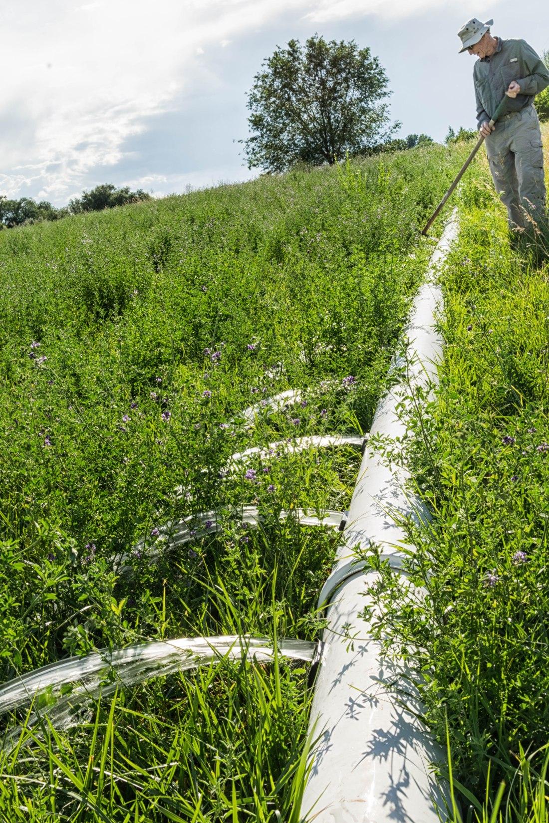 irrigating_