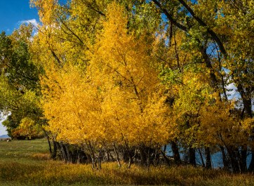 Colorado Yellow