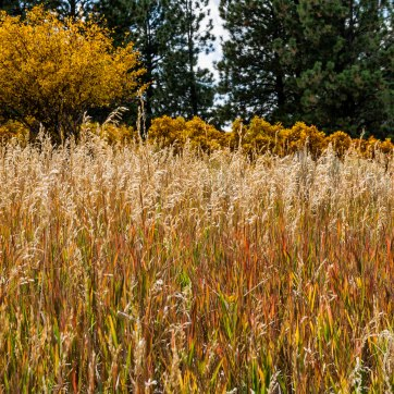 Grasses.Mancos St Pk