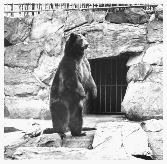 Smokey Bear, National Zoo