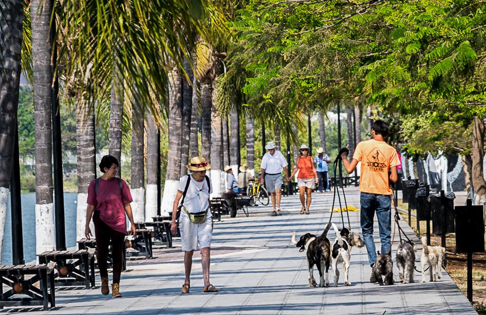 Walking the dogs.Ajijic
