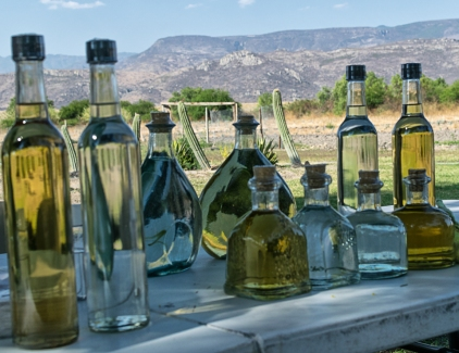 Tasting mescal at an agave farm