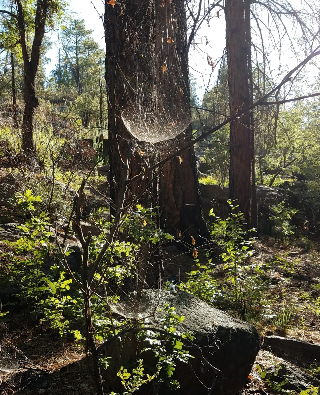 Spider webs capturing sunlight