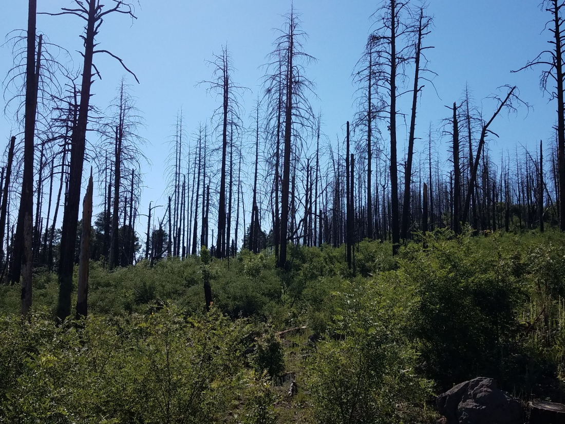 Up Signal Peak Rd.burn area.2.7-14-19