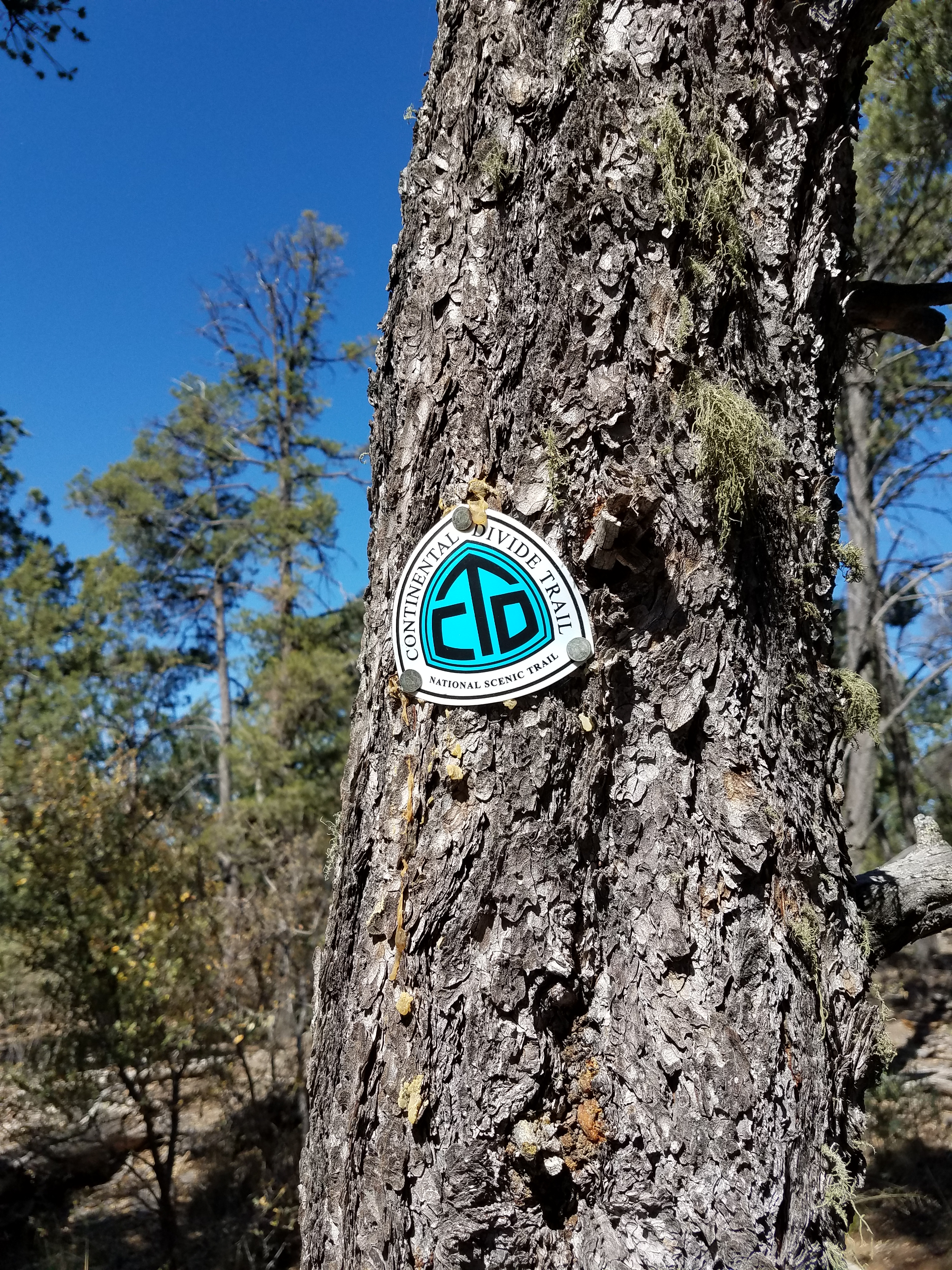 New Mexico Blue on the CD Trail